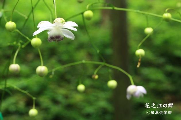 gardening_4436.JPG