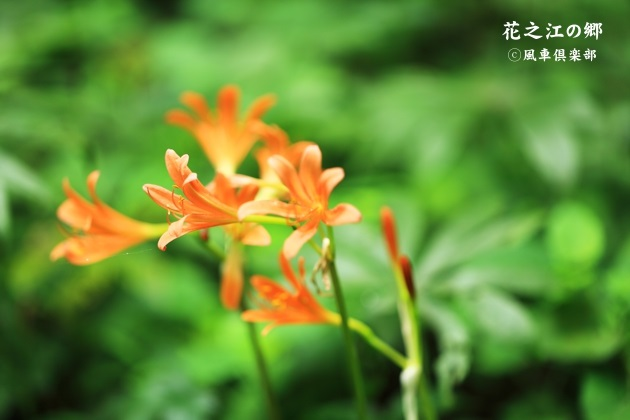 gardening_4437.JPG
