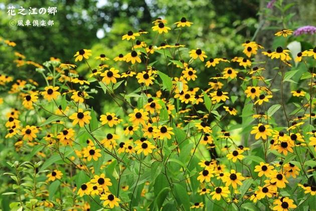 gardening_4438.JPG