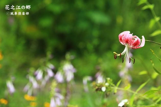 gardening_4446.JPG