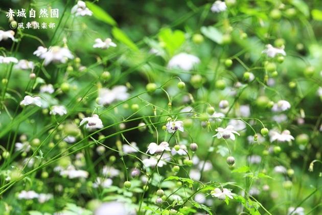 gardening_4461.JPG