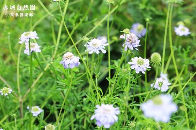 gardening_4464.JPG