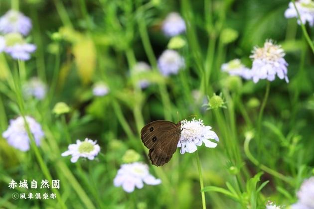 gardening_4465.JPG