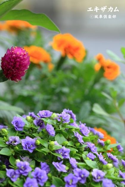 gardening_4475.jpg