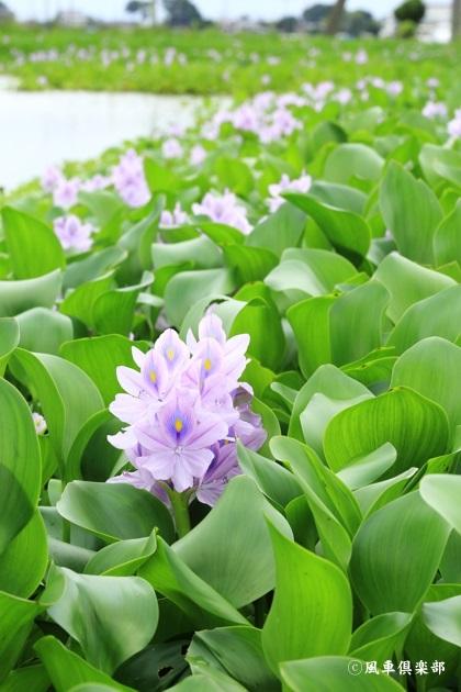 gardening_4480.JPG