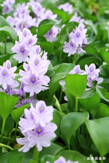 gardening_4481.JPG