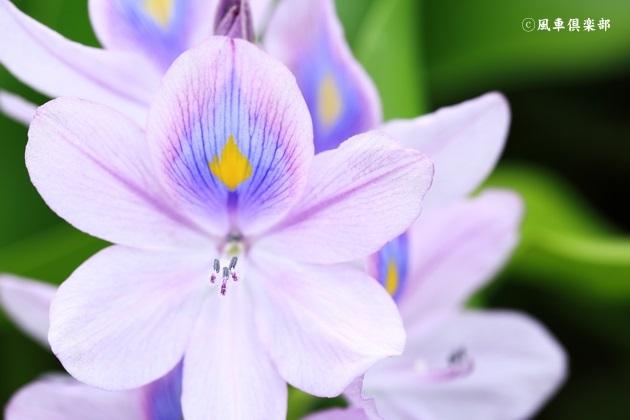 gardening_4483.JPG