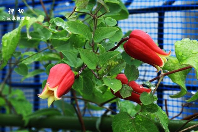 gardening_4488.JPG