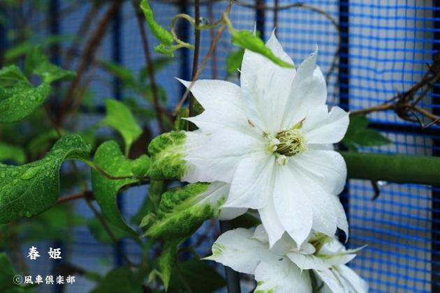 gardening_4490.JPG
