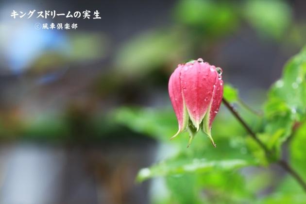gardening_4491.JPG