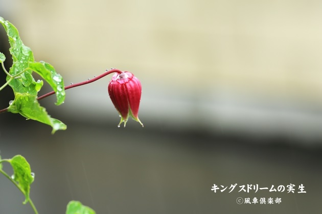 gardening_4492.JPG