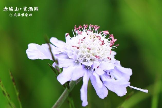 gardening_4496.JPG