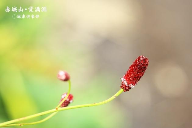 gardening_4497.JPG