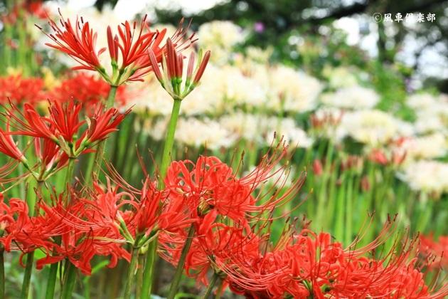 gardening_4551.JPG