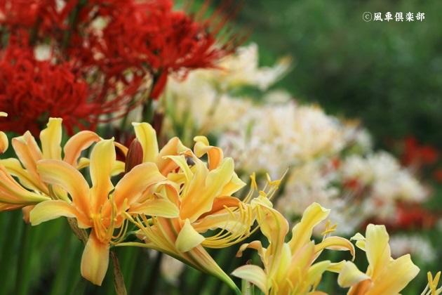 gardening_4556.JPG