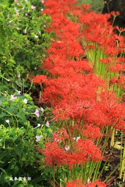 gardening_4558.JPG