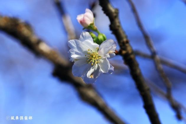 gardening_4563.JPG