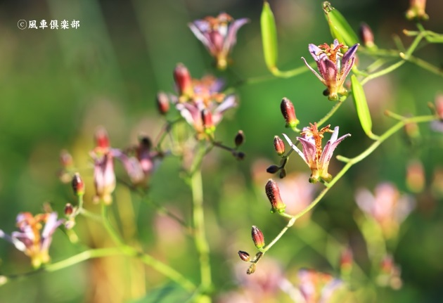 gardening_4564.JPG