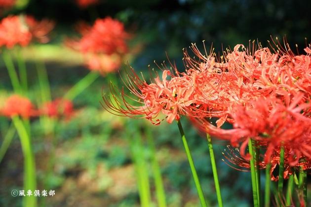 gardening_4566.JPG