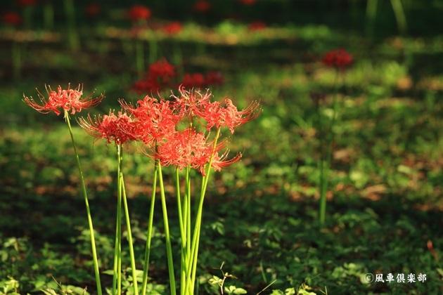 gardening_4567.JPG