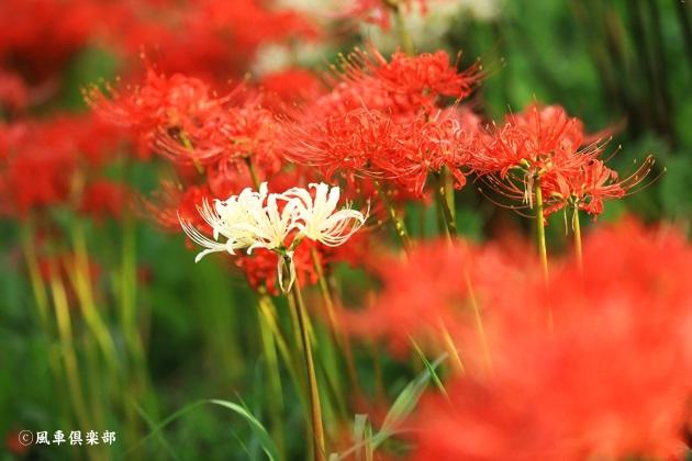 gardening_4575.JPG