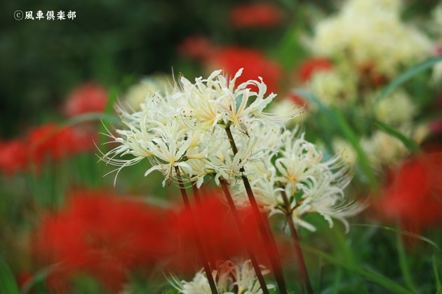 gardening_4576.JPG