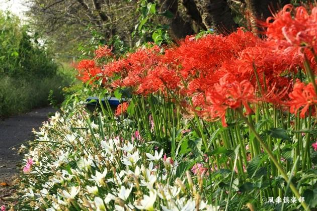 gardening_4577.JPG
