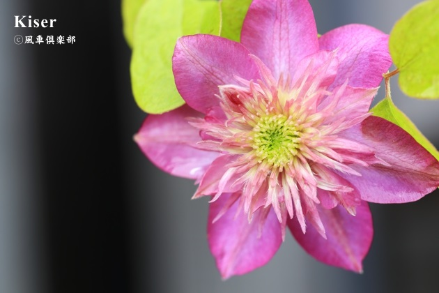 gardening_4578.JPG