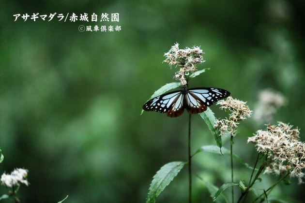 gardening_4579.JPG