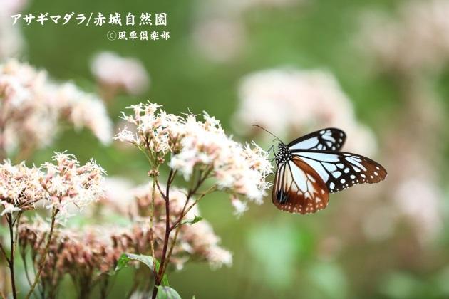 gardening_4580.JPG