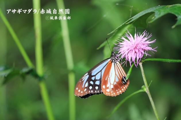 gardening_4581.JPG
