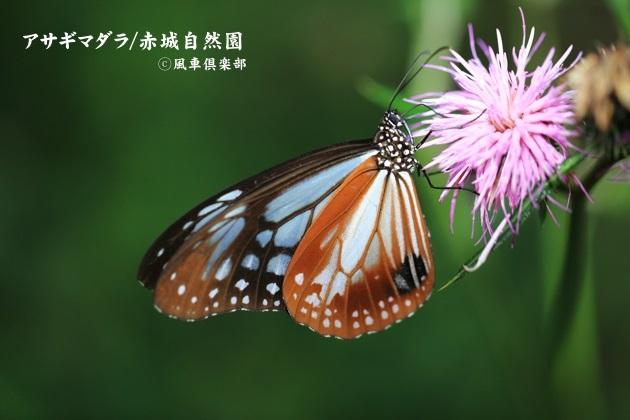 gardening_4582.JPG