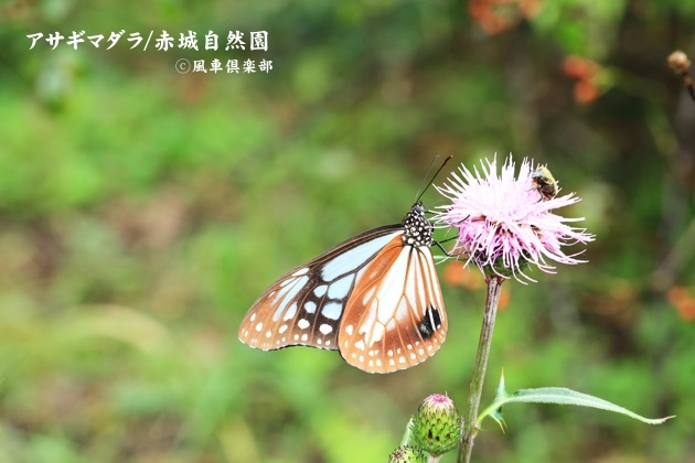 gardening_4583.JPG