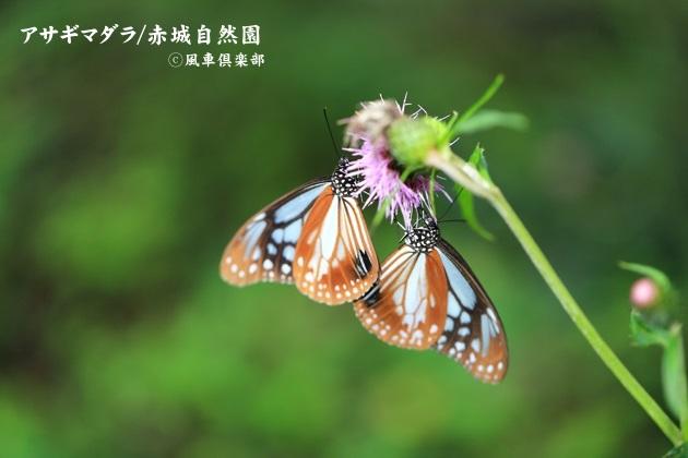 gardening_4584.JPG