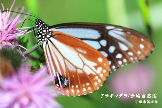 gardening_4585.JPG
