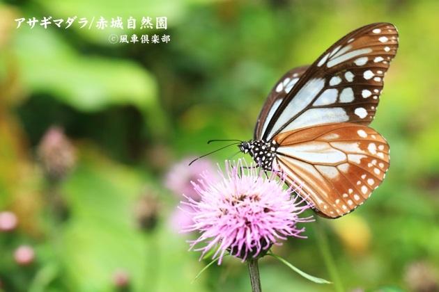 gardening_4586.JPG