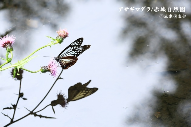 gardening_4587.JPG