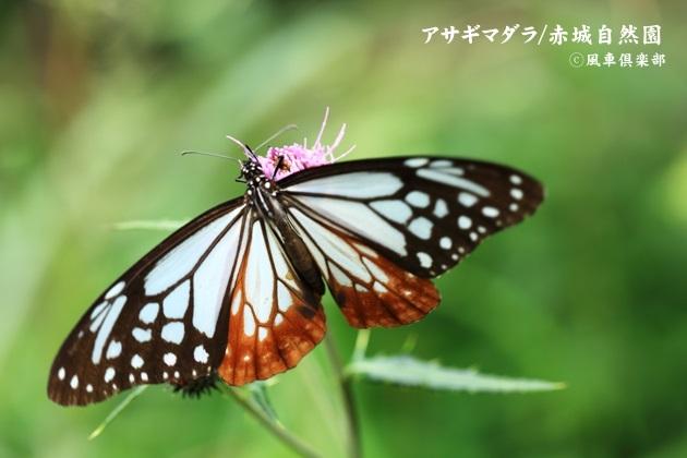 gardening_4588.JPG