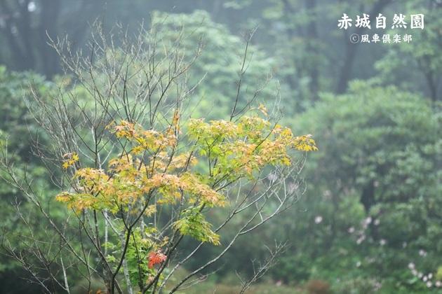 gardening_4590.JPG