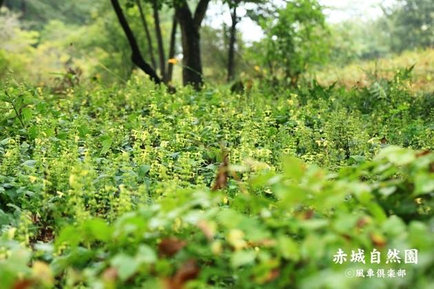gardening_4593.JPG