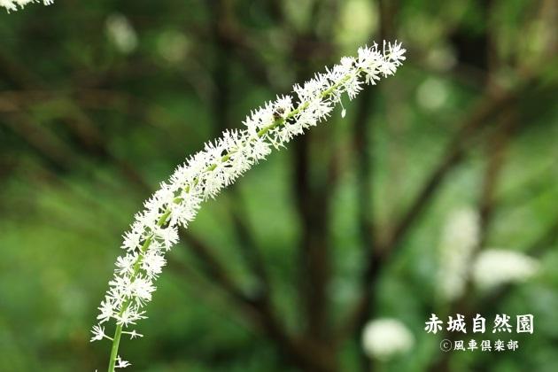gardening_4594.JPG