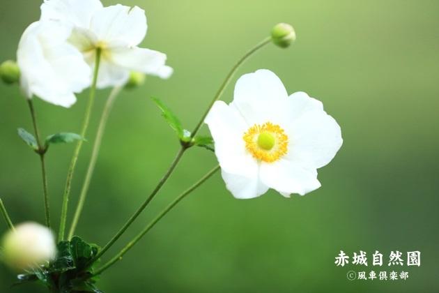 gardening_4598.JPG