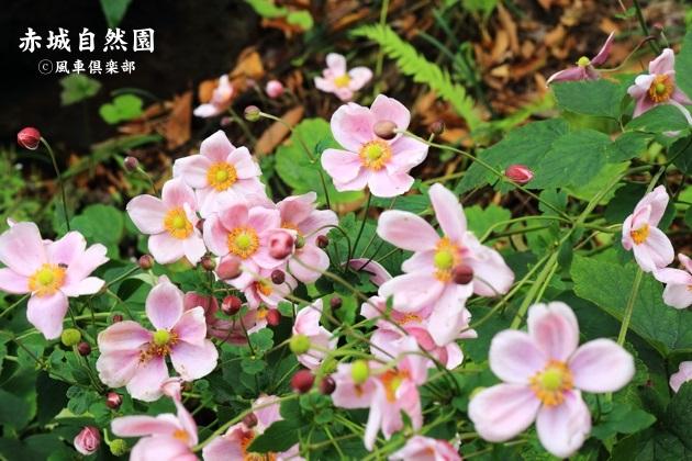 gardening_4599.JPG