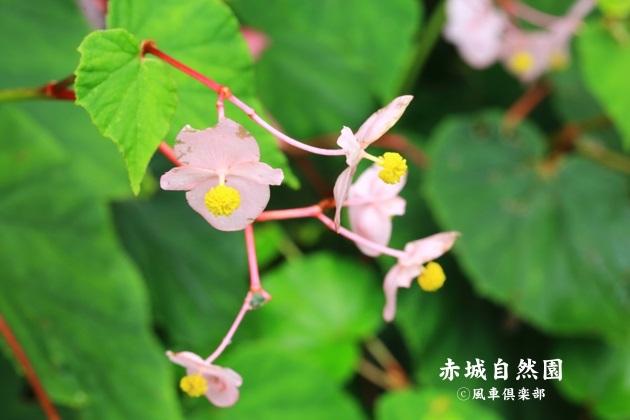 gardening_4600.JPG