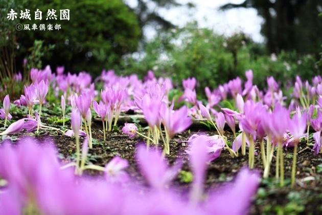 gardening_4601.JPG