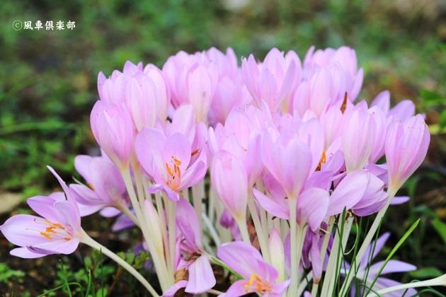 gardening_4603.JPG