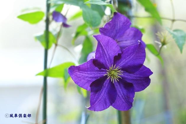 gardening_4604.JPG