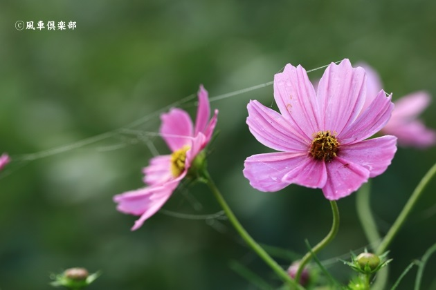 gardening_4605.JPG