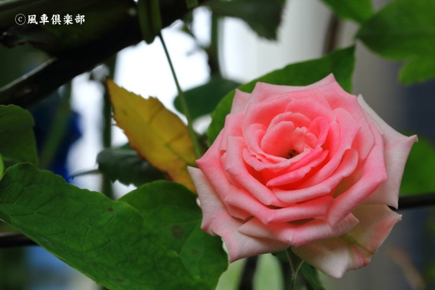 gardening_4694.JPG