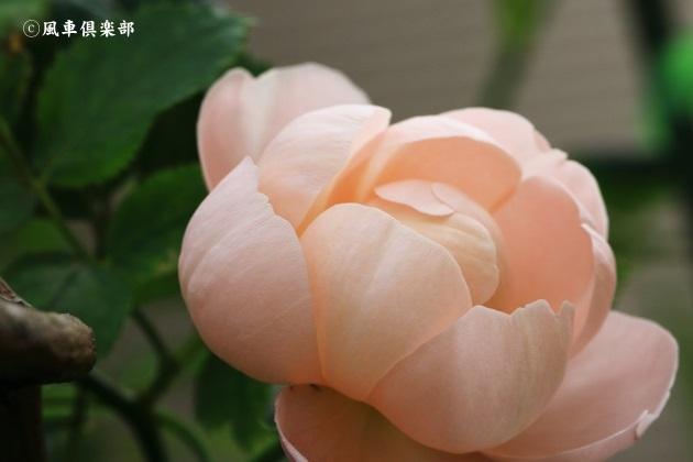 gardening_4695.JPG